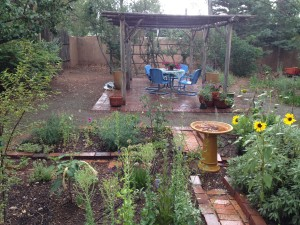 The first monsoon rain drenching the garden.