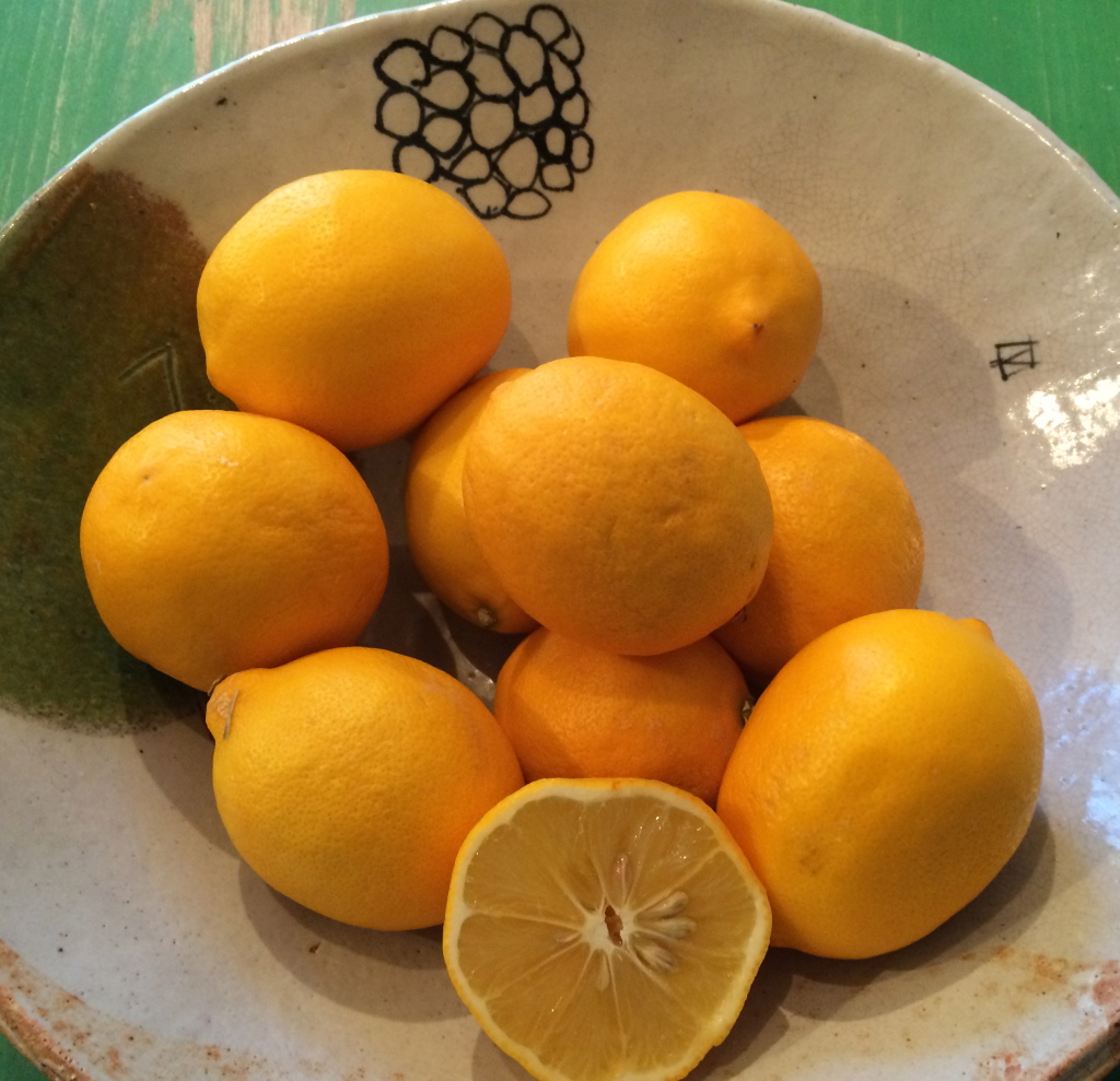 Meyer Lemons in a Bob Brady bowl.